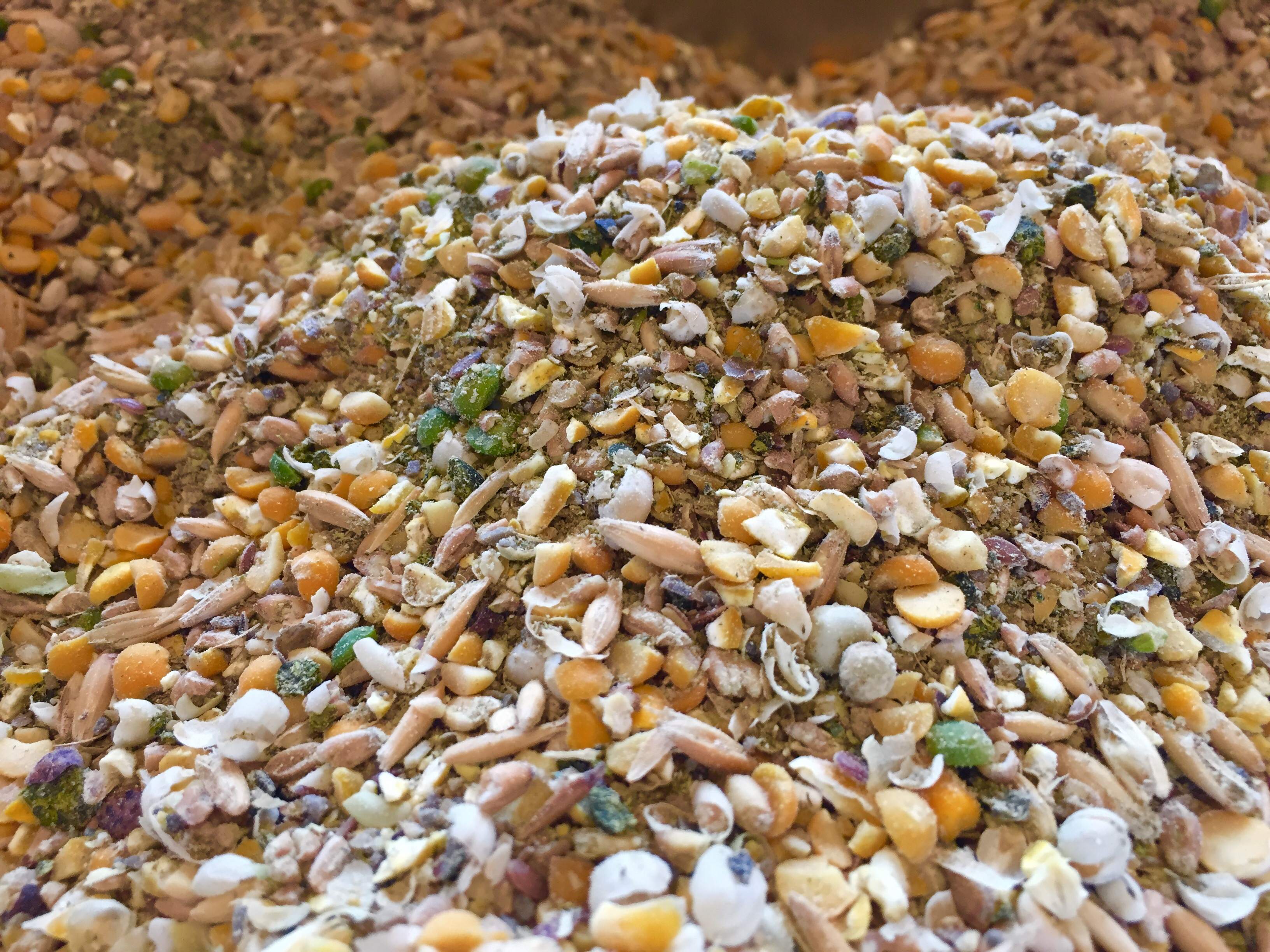 Feed: Layer Chicken Feed – Soy & Corn Free (50 Lbs)